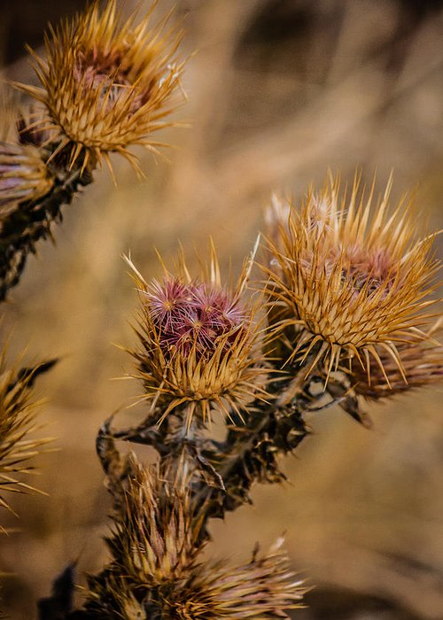 Colorado Greeting Card featuring the photograph Thistle by Karen Saunders