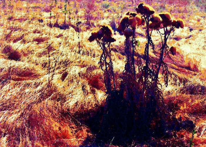 Thistles Greeting Card featuring the photograph Thistles In A Summer Field by Timothy Bulone