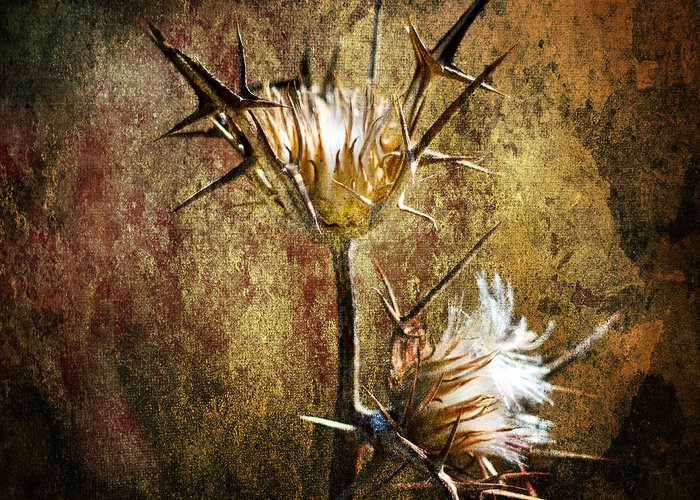 Background Greeting Card featuring the photograph Thorns by Stelios Kleanthous