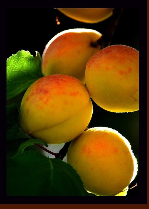 Apricots Greeting Card featuring the photograph Those Glowing Golden Apricots by Susanne Still