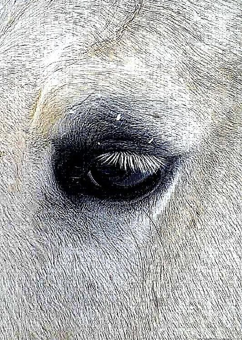 Equine Eye. Horse. Farm Animals Greeting Card featuring the photograph Thought's by Ann Butler