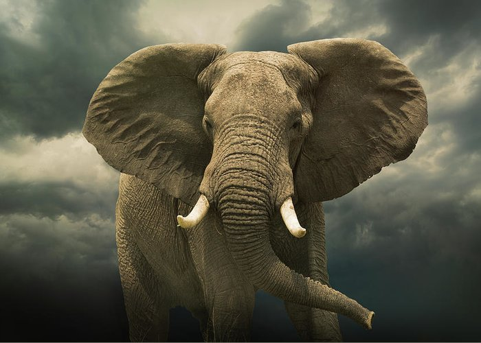 Kenya Greeting Card featuring the photograph Threatening African Elephant Under by Buena Vista Images