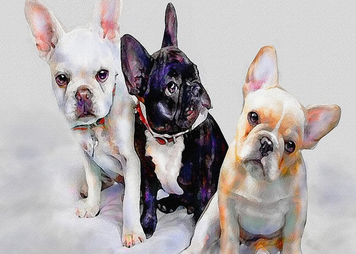 French Bulldog Greeting Card featuring the digital art Three Frenchie Puppies by Jane Schnetlage