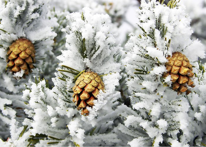 Three Greeting Card featuring the photograph Three Frosty Cones by Marilyn Hunt