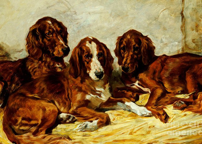 Dog Greeting Card featuring the painting Three Irish Red Setters by John Emms