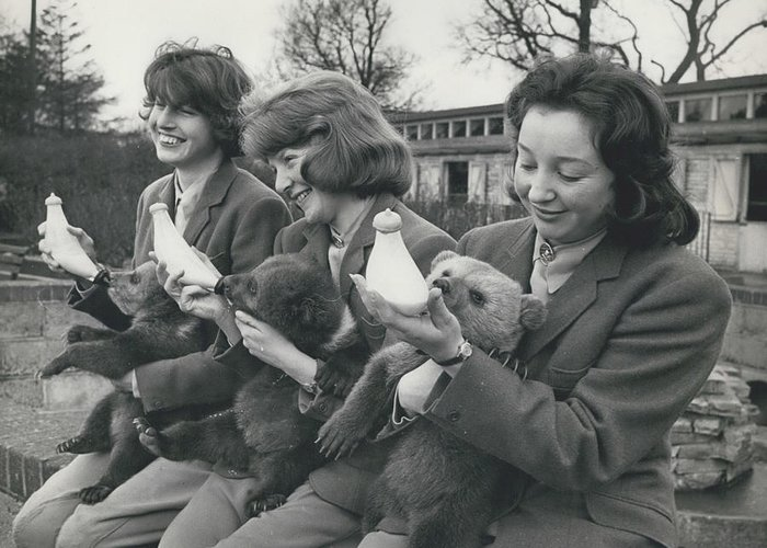 retro Images Archive Greeting Card featuring the photograph Three Little Bears Called Cilla, George And Ringo by Retro Images Archive
