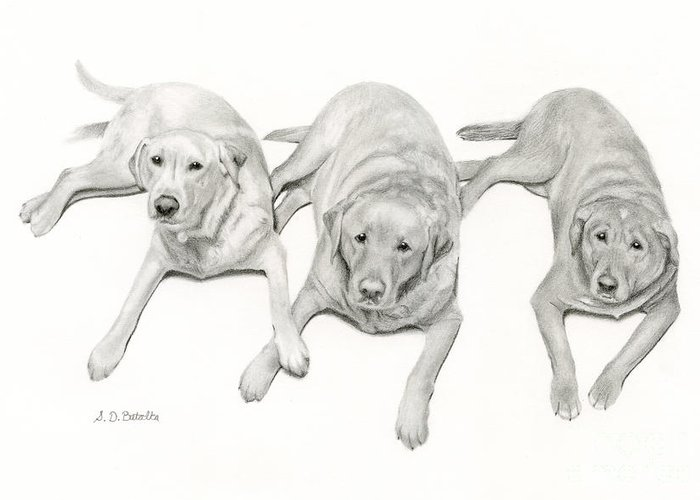 Pencil Drawings Of Pets Greeting Cards