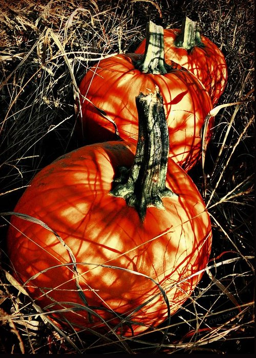 Halloween Greeting Card featuring the photograph Three Pumpkins by Chris Berry