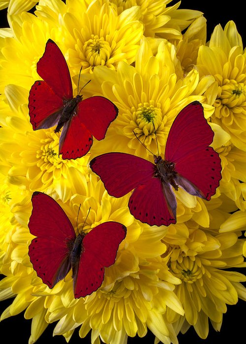 Three Red Butterfly Poms Greeting Card featuring the photograph Three Red Butterflys by Garry Gay