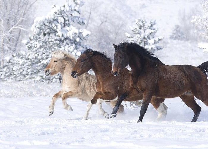 Horse Greeting Card featuring the photograph Three Snow Horses by Carol Walker