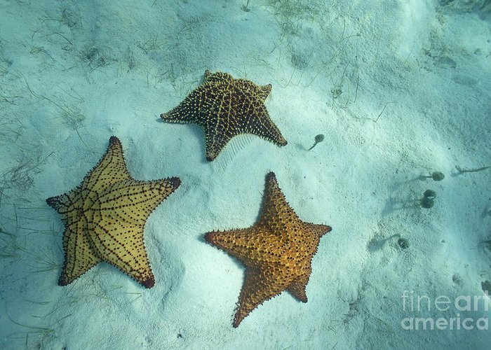Abundance Greeting Card featuring the photograph Three Starfishes On Sandy Seabed by Sami Sarkis