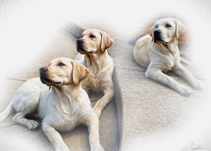 Labrador Retriever Greeting Card featuring the digital art Three's Company by Peter Chilelli
