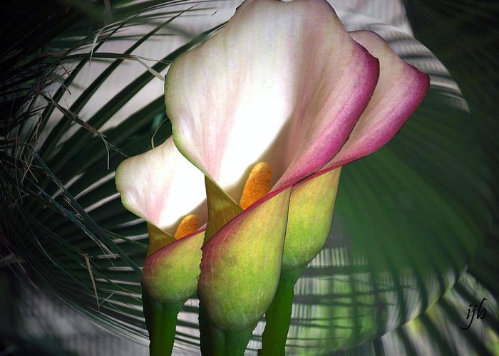 Lily Greeting Card featuring the photograph Thrice As Nice by Irma BACKELANT GALLERIES