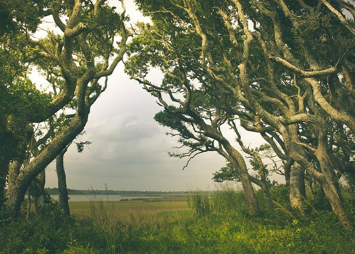 Live Oak Greeting Card featuring the photograph Through The Twisty Trees by Shane Holsclaw