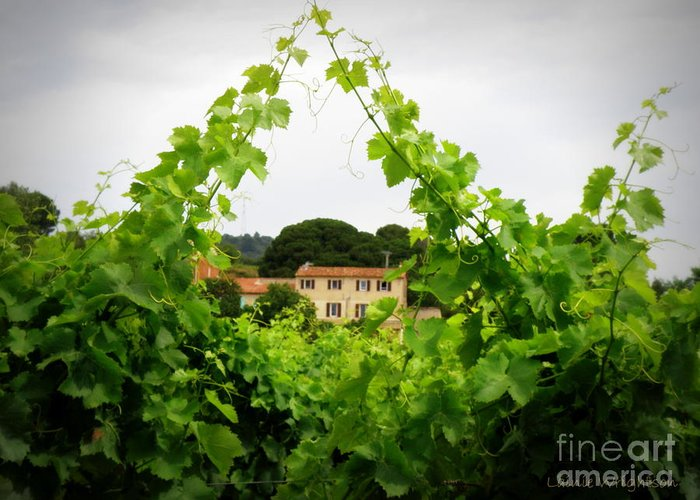 Vineyard Greeting Card featuring the photograph Through The Vines by Lainie Wrightson