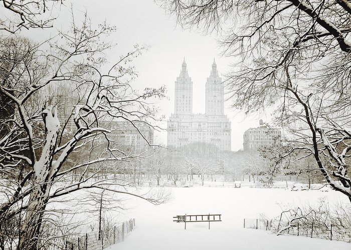 New York City Greeting Card featuring the photograph Through Winter Trees - Central Park - New York City by Vivienne Gucwa