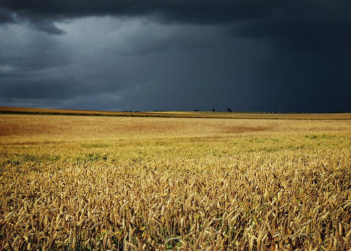 Scenics Greeting Card featuring the photograph Thunderstorm Clouds Over Wheat Field by Avtg