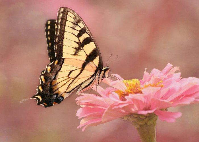 Tiger Swallowtail Butterfly Greeting Card featuring the photograph Tiger Swallowtail In The Pink by Kim Hojnacki