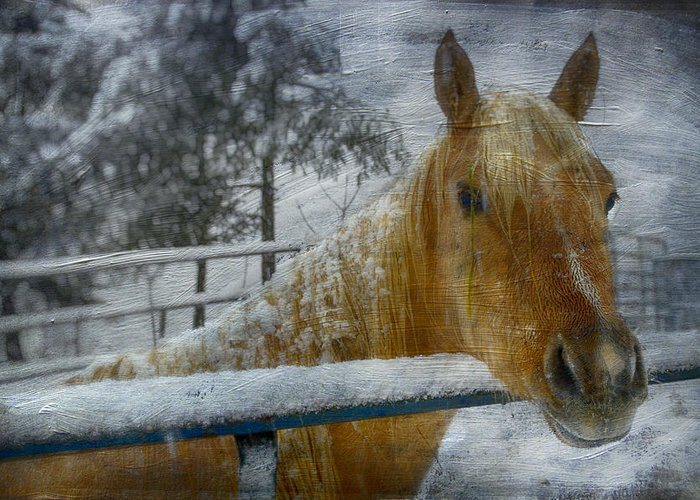 Horse Greeting Card featuring the photograph Time Stands Still by Kathy Jennings