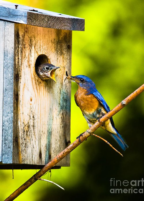 Bluebird Greeting Card featuring the photograph Time To Fly by Ronald Lutz