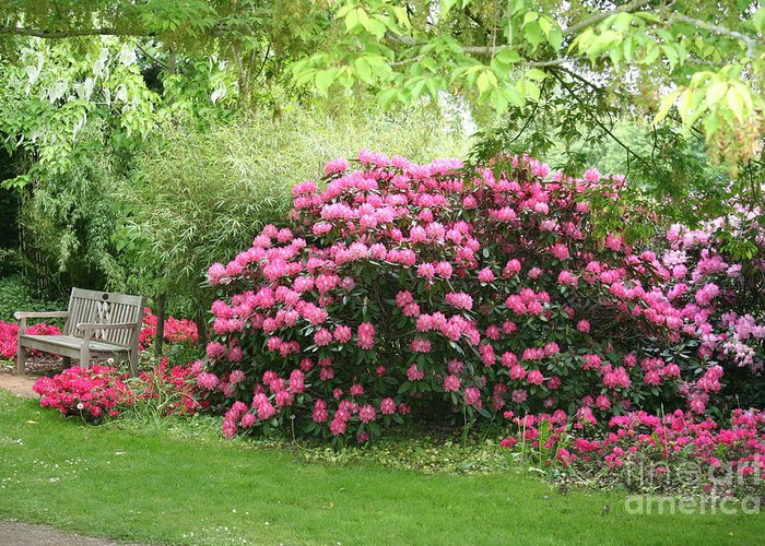 Rhododendron Greeting Card featuring the photograph Time To Relax by Christiane Schulze Art And Photography