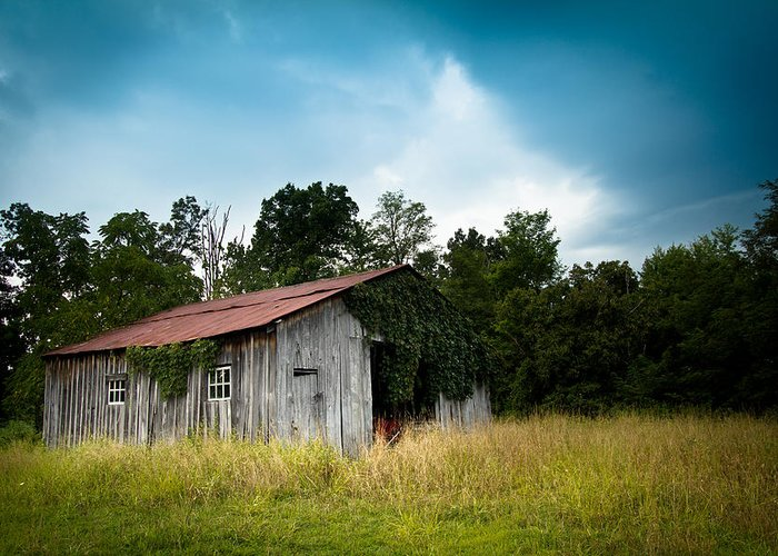 Barn Greeting Card featuring the photograph Tin Roof...ivy Covered Barn by Shane Holsclaw