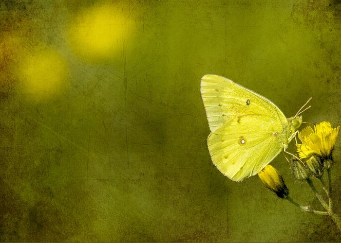 Butterfly Greeting Card featuring the photograph Tiny Green Dancer by Bill Tiepelman