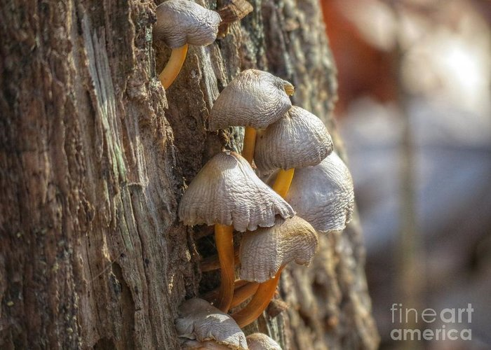Nature Greeting Card featuring the photograph Tiny Mushrooms On The Side Of A Stump by Chuck Buckner
