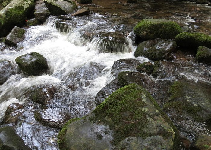 Smoky Mountains Greeting Card featuring the photograph Tiny Waterfalls by Rita Mueller