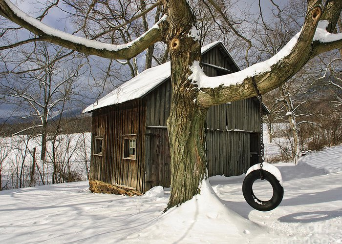 Tire Swing Greeting Card featuring the photograph Tire Swing Shed by Timothy Flanigan