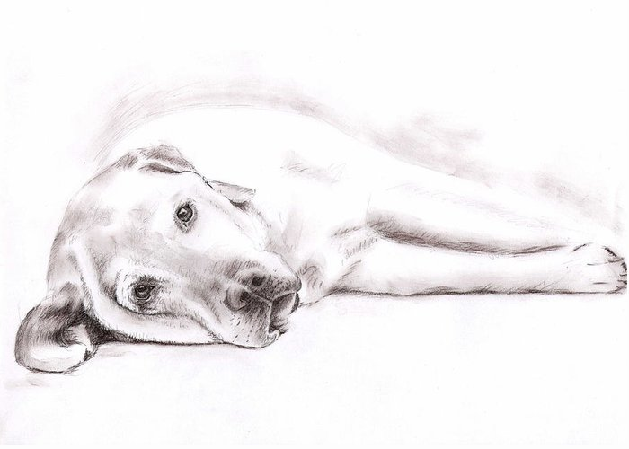 Dog Greeting Card featuring the drawing Tired Labrador by Nicole Zeug