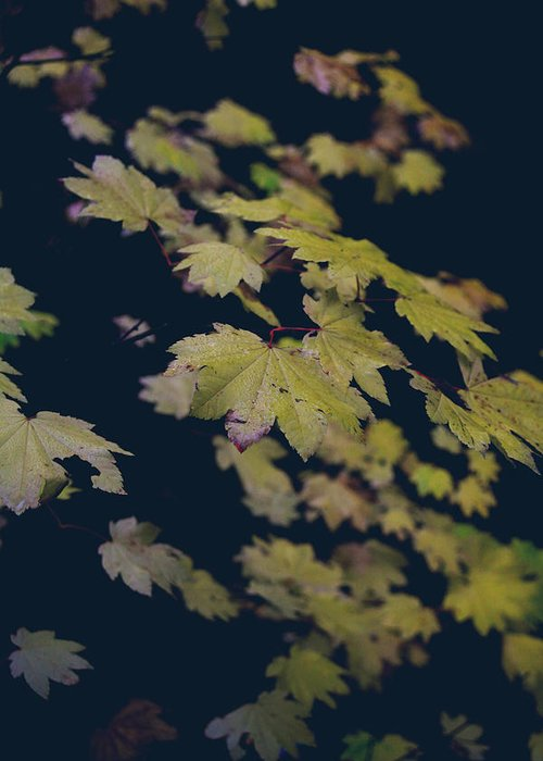 Leaves Greeting Card featuring the photograph To Have You Near by Laurie Search