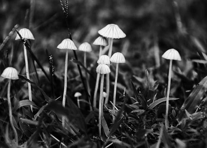 Toadstools Greeting Card featuring the photograph Toadstools V3 by Douglas Barnard