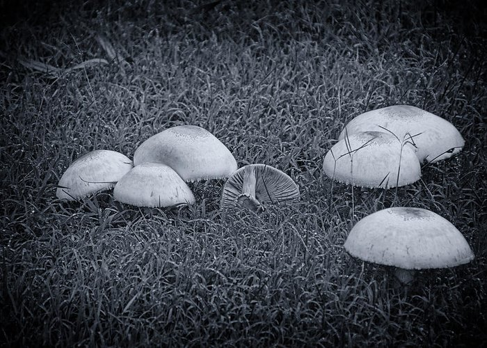 Toadstools Greeting Card featuring the photograph Toadstools V6 by Douglas Barnard
