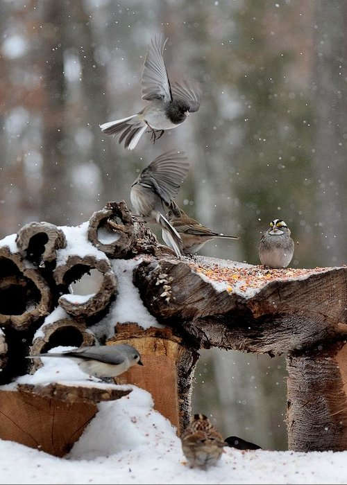 Bird Greeting Card featuring the photograph Todays Art 12 by Lawrence Hess