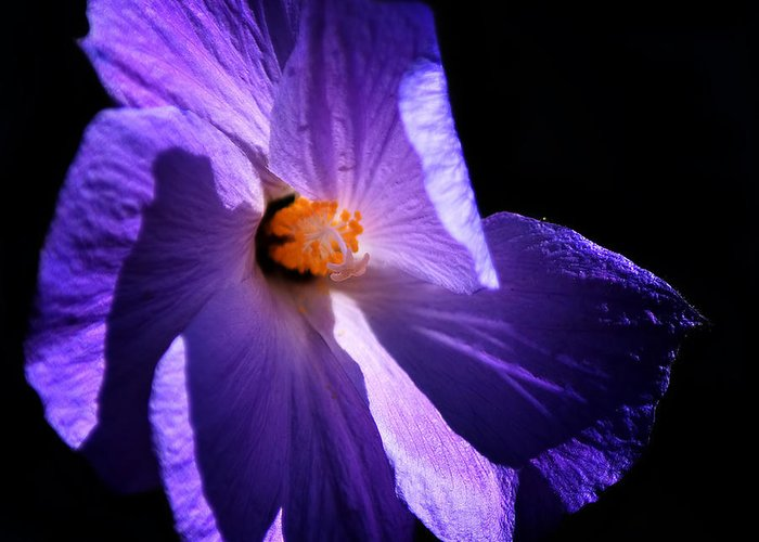 Purple Greeting Card featuring the photograph Todays' Blessing by Camille Lopez