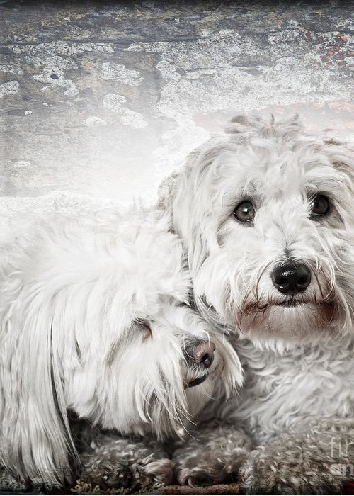 Dogs Greeting Card featuring the photograph Together by Elena Elisseeva
