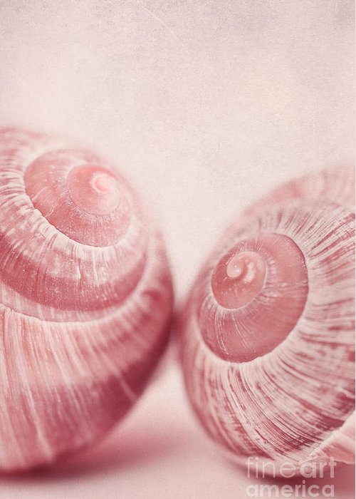 Snail Greeting Card featuring the photograph Togetherness by Priska Wettstein