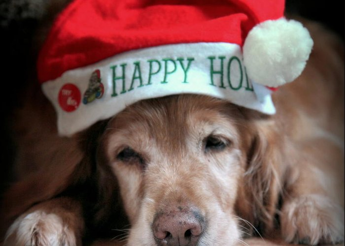 Dogs Greeting Card featuring the photograph Too Much Eggnog by Karen Wiles