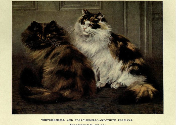 Manx Greeting Card featuring the painting Tortoiseshell And Tortoiseshell And White Persians by Philip Ralley