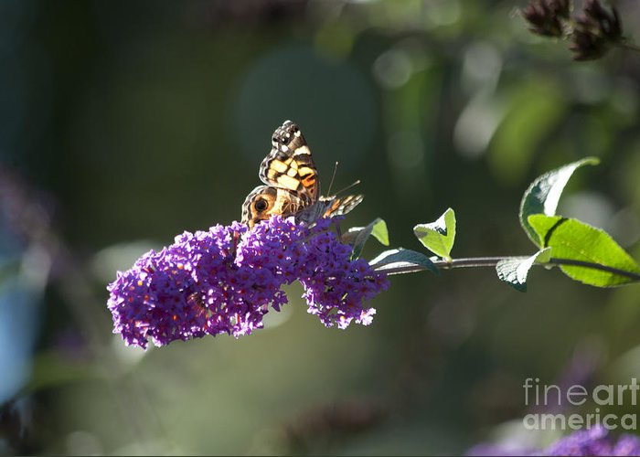 Butterfly Greeting Card featuring the photograph Touchdown by Affini Woodley