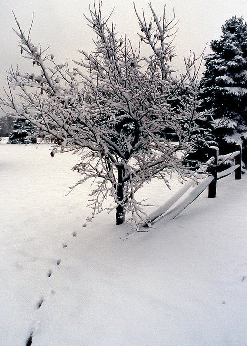 Snow Greeting Card featuring the photograph Tracks by Skip Willits