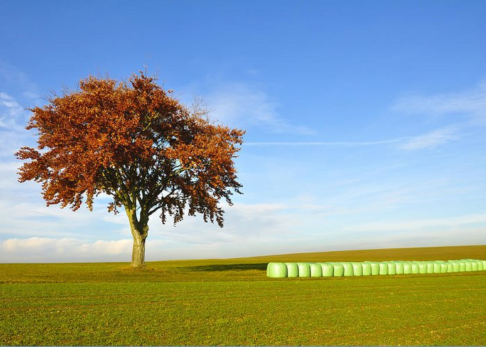 Agriculture Greeting Card featuring the photograph Tree And Hay Bales by Aged Pixel