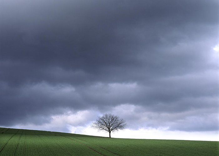 Outdoors Greeting Card featuring the photograph Tree And Stormy Sky by Bernard Jaubert