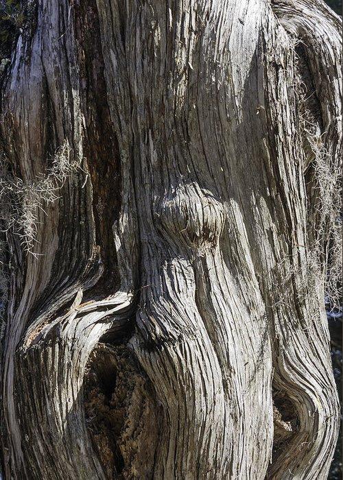 Tree Bark No. 3 Greeting Card featuring the photograph Tree Bark No. 3 by Lynn Palmer