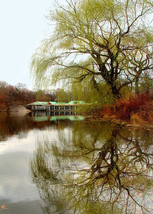 Tree Greeting Card featuring the photograph Tree By The River by Mark Ashkenazi