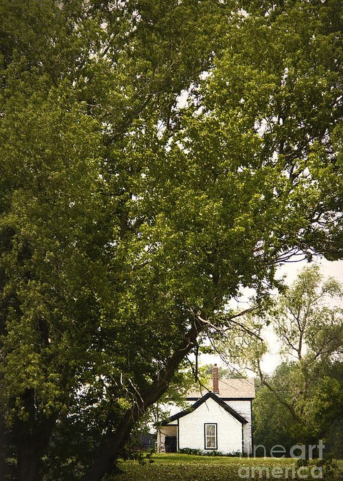 Trees; Many; Summer; Hidden; Hiding; Lush; Full; Leaves; Place; Outside; Outdoors; Nature; Landscape; Land; House; Home; Country; Countryside; Rural; White; Window; Secluded Greeting Card featuring the photograph Tree Covered by Margie Hurwich