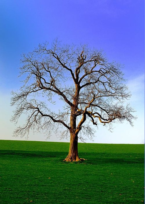 Clearing Greeting Card featuring the photograph Tree by FL collection