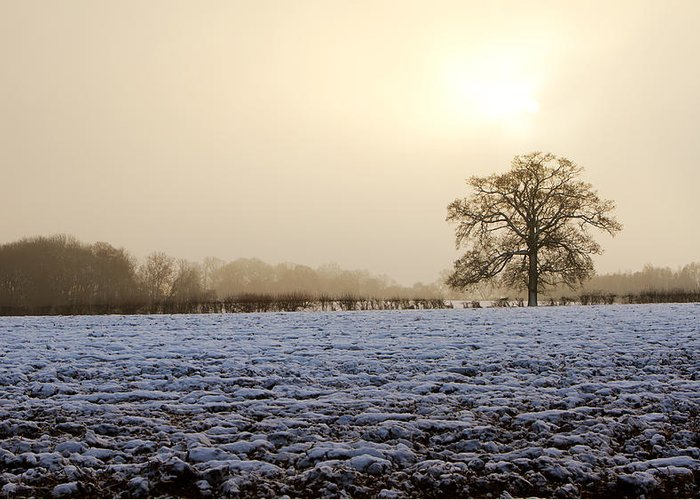 Beautiful Greeting Card featuring the photograph Tree In A Field On A Snowy Day by Fizzy Image