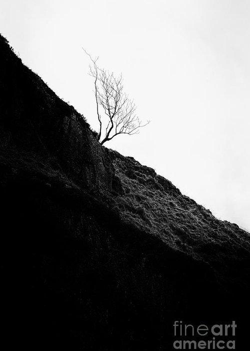 Beautiful Scotland Greeting Card featuring the photograph Tree In Mist II by John Farnan